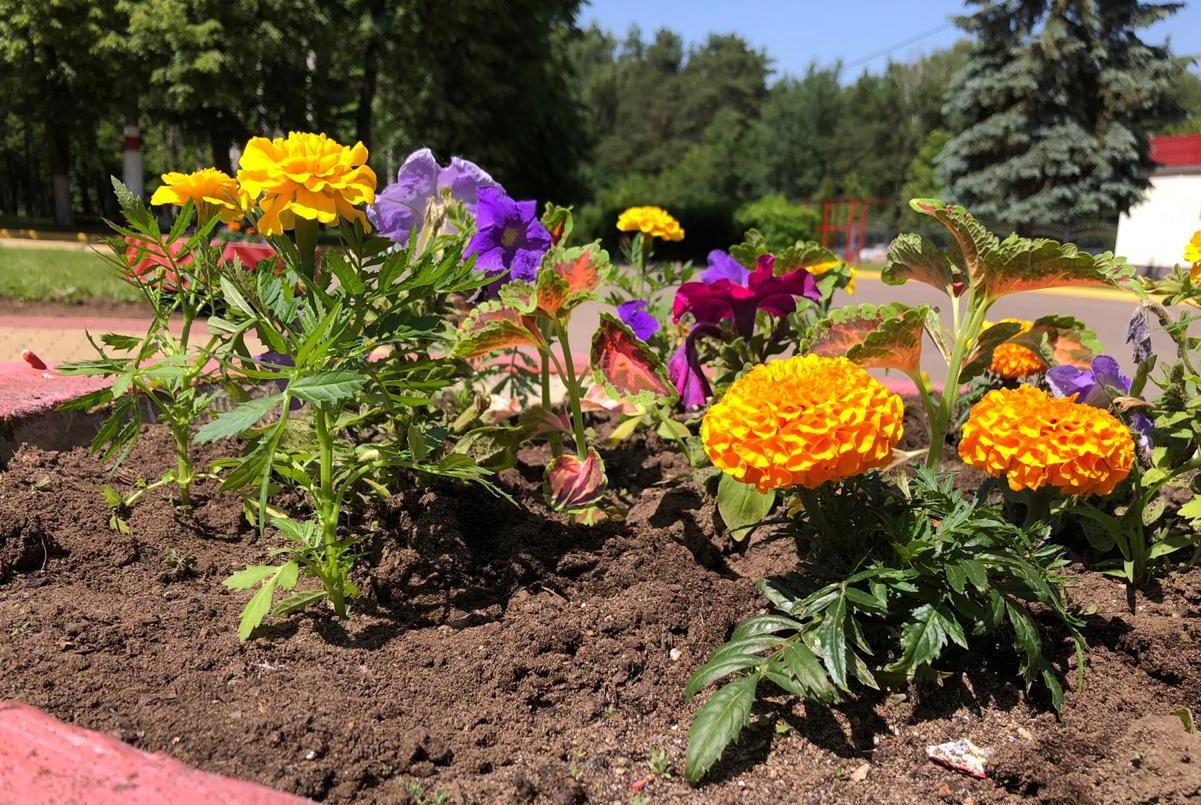 Благоустройство цветника в МВОКУ